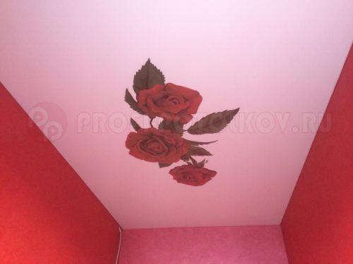 Натяжной потолок с фотопечатью от компании «Профи-Потолков»